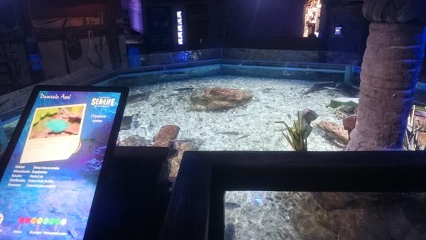pantallas digitales para publicidad sealife